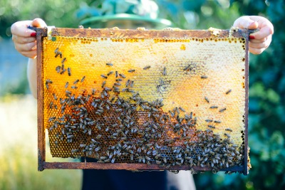 Bee hive frame being held up