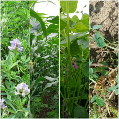 A collage of various crops in the crop rotation