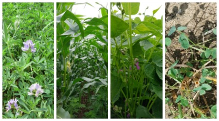 Various crops in the crop rotation