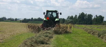 Raking the hay into rows