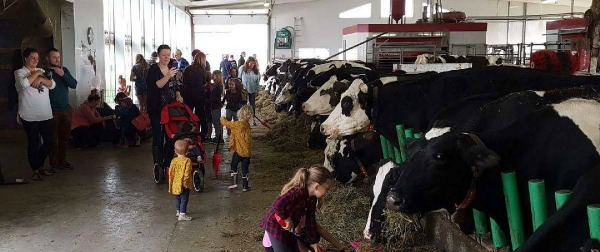 Families in the Main Dairy Barn
