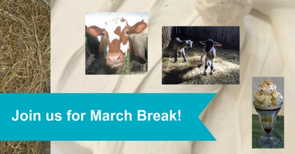 March Break collage
