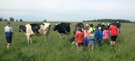 Children in field with cows at Mapleton's Organic